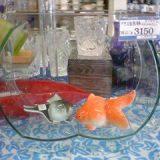 ガラスの変型メダカ鉢